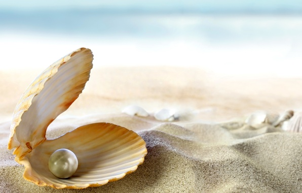 Picture sand, sea, beach, the sun, tropics, the ocean, shell, beach, sand, seashell, pearl, perl