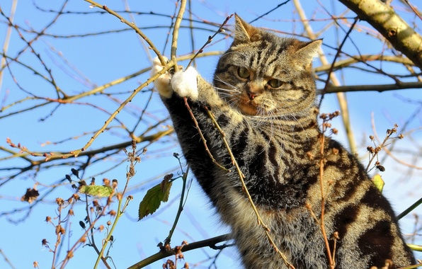 Picture cat, cat, branches, tree, on the tree