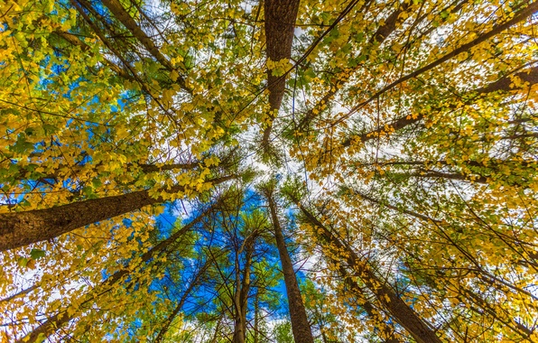 Picture autumn, the sky, leaves, trees, trunk, crown