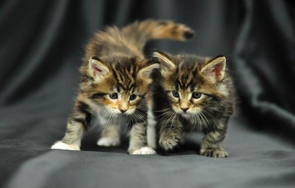 Picture photo, baby, kitty, neko, pussy