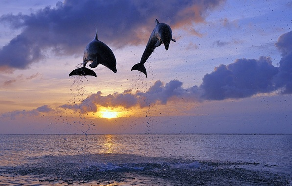 Picture sea, the sun, jump, dolphins