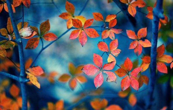 Picture leaves, macro, orange, branches, background, widescreen, Wallpaper, wallpaper, form, leaves, widescreen, leaves, background, full screen, …