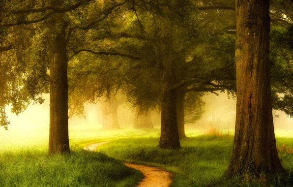 Picture greens, forest, grass, trees, fog, Netherlands, path