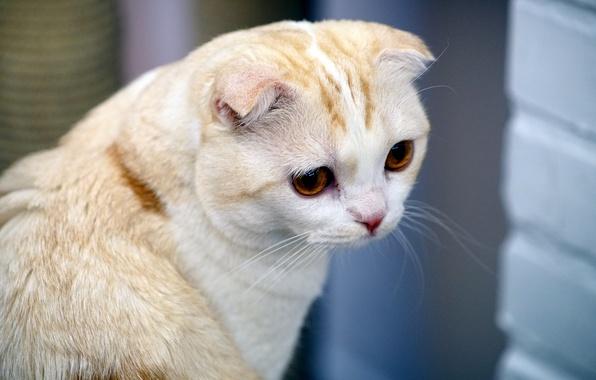 Picture cat, cat, mustache, look, face