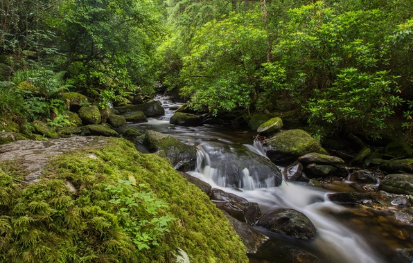 Picture greens, forest, trees, stream, stones, for, moss, the bushes, Ireland, Owengarriff River, Killarney national park