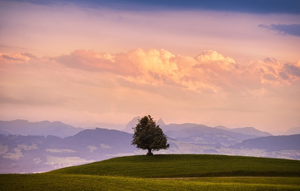 Picture field, the sky, grass, clouds, mountains, nature, tree