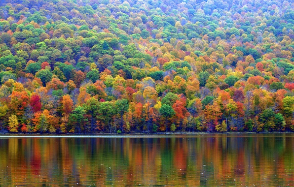 Picture autumn, forest, trees, lake, slope