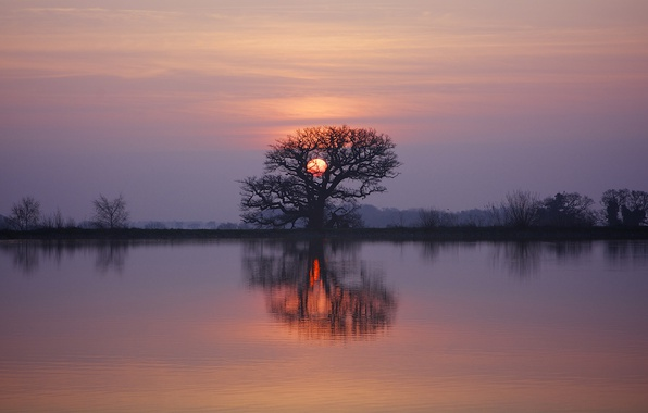 Picture twilight, sunset, lake, tree, dusk, reflection, branches