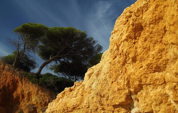 Picture the sky, open, tree, rocks, Sandstone