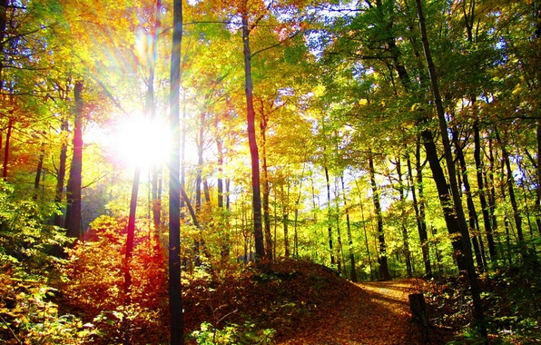 Picture autumn, forest, the sun, trees, nature, photo, trail, rays of light