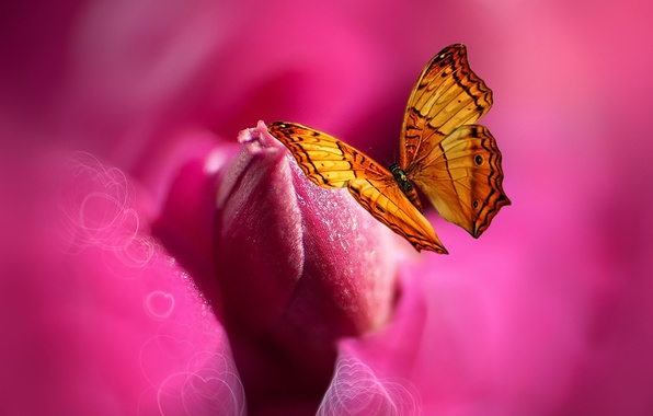 Picture flower, butterfly, paint, heart, styling, Josep Sumalla