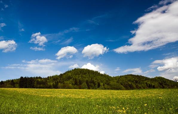 Picture greens, grass, green, hills, grass, Austria, Spring Nature, austria, carinthia austria, landscape