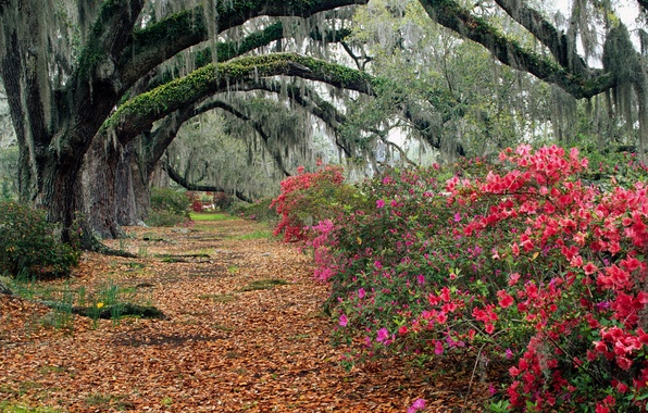 Picture autumn, leaves, trees, landscape, flowers, Park, track, alley, the bushes