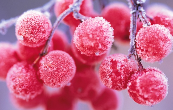 Picture frost, frost, Kalina.berries