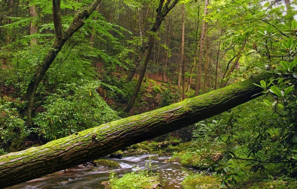 Picture Water, Tree, Forest, Foliage