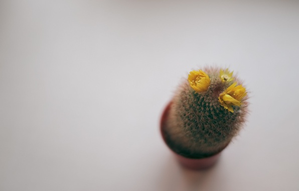 Picture flower, needles, plant, cactus, barb