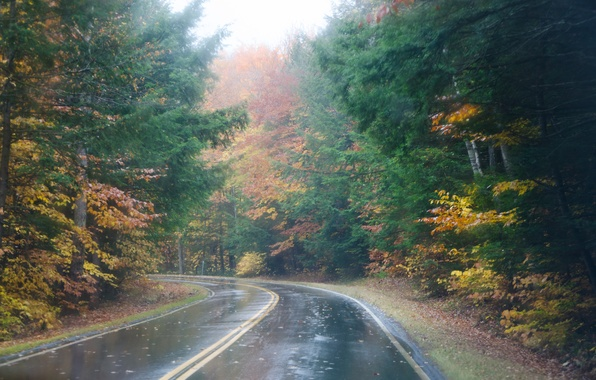 nature forest autumn fog rain path road leaves maroon red tree HD ...