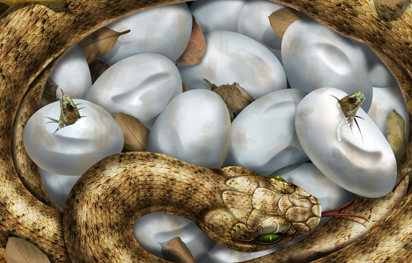 Picture figure, snake, eggs