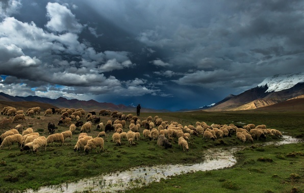 Picture field, nature, river, sheep
