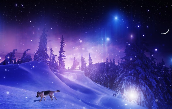 Picture winter, forest, stars, snow, trees, snowflakes, night, photoshop, dog, a month, the snow, shepherd