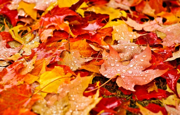 Picture autumn, leaves, drops, macro, nature, droplets, yellow, orange