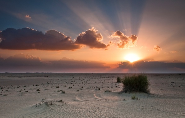 Picture the sky, the sun, clouds, sunset, orange, blue, desert, Bush, desert, sunset, clouds, sand, sunlight, ...