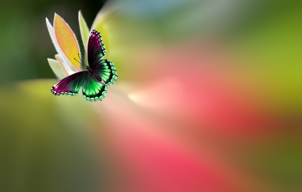 Picture flower, butterfly, paint, beautiful, bright, motley, Josep Sumalla