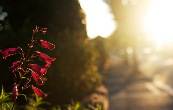 Picture road, light, flowers