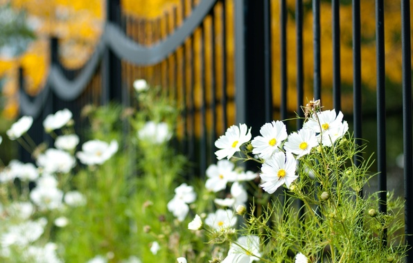 Picture greens, white, macro, flowers, widescreen, Wallpaper, vegetation, the fence, plant, blur, gate, the fence, wallpaper, …