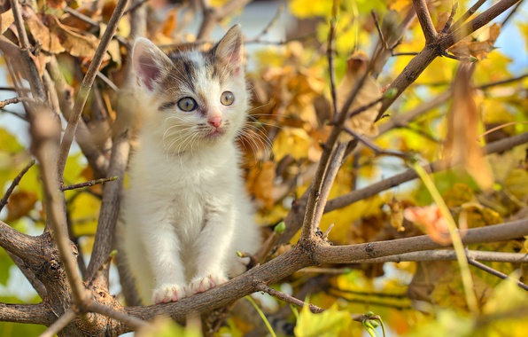 Picture puppy, cat, autumn, tree, branches, foliage, buds