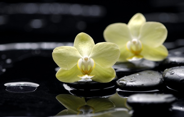 Picture water, drops, flowers, reflection, stones, yellow, orchids, black, Phalaenopsis, flat