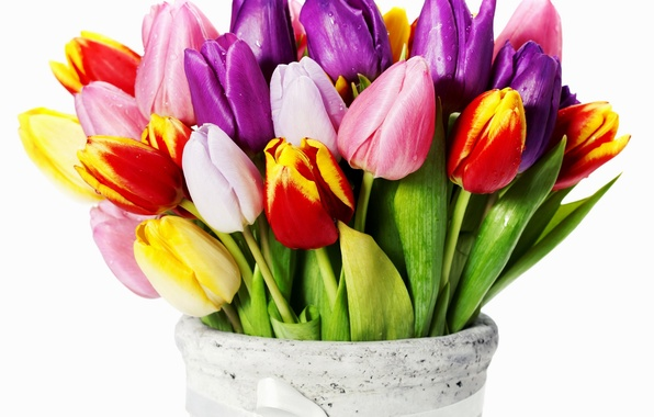 Picture flowers, yellow, purple, tulips, red
