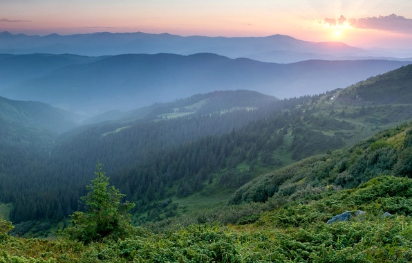 Photo wallpaper morning, mountains, fog, Ukraine, dawn, Carpathians, forest