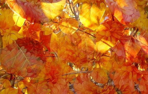 Picture autumn, leaves, line, nature, paint