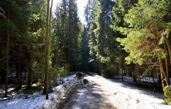 Picture road, forest, snow, nature, tree, Spring, ate