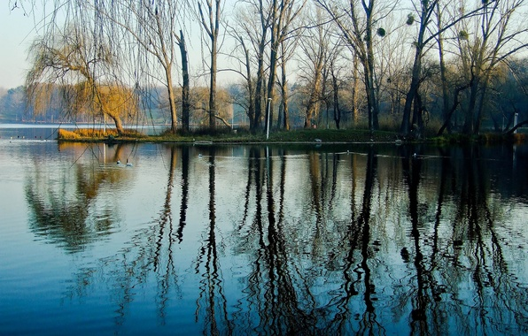 Picture water, trees, lake, Park, spring