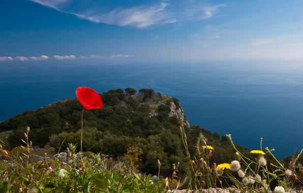 Picture sea, flower, Mac, horizon