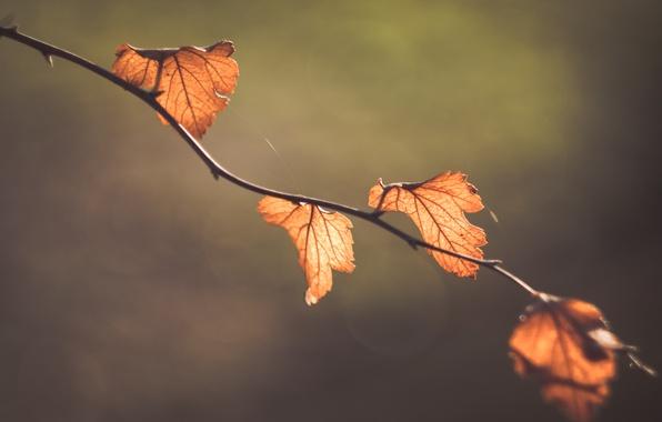 Picture macro, nature, background, foliage, branch, bokeh