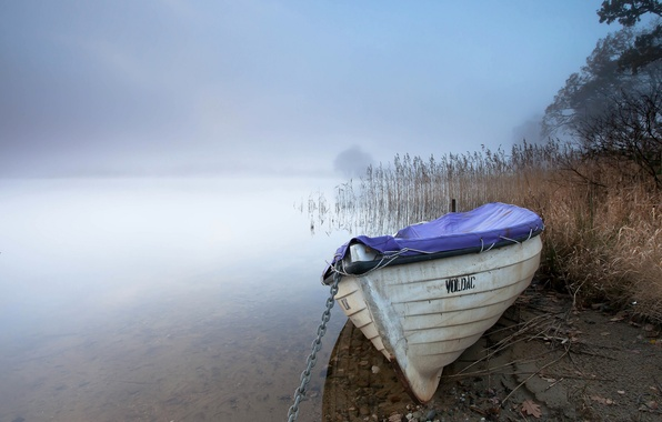 Picture fog, lake, boat, reed