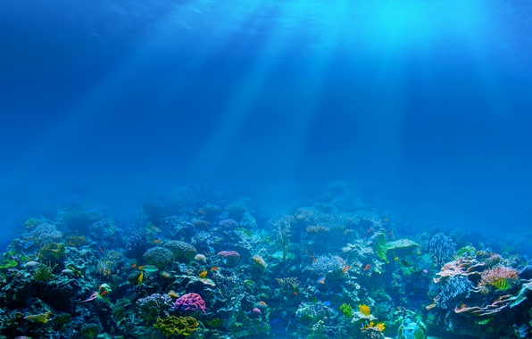 Picture sea, fish, the bottom, corals, underwater world, rays of light