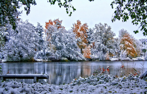Picture winter, the sky, grass, snow, trees, nature, river, foliage