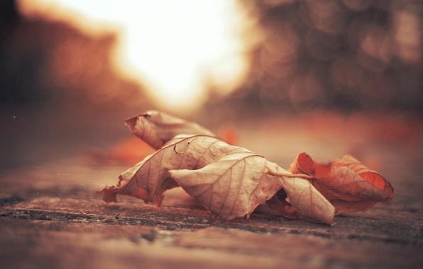 Picture autumn, sheet, foliage, leaf, maple, leaves, bokeh, bokeh, casting