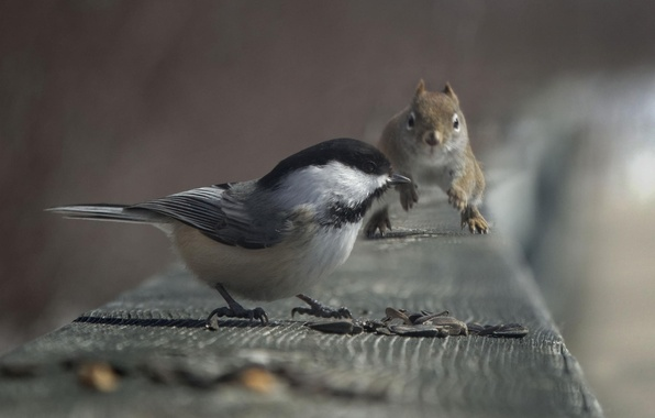 Picture protein, bird, seeds, titmouse