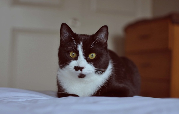 Picture eyes, cat, mustache, black and white
