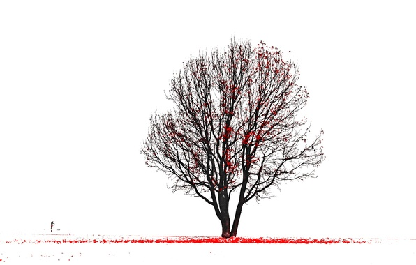 Picture tree, silhouette, red leaves