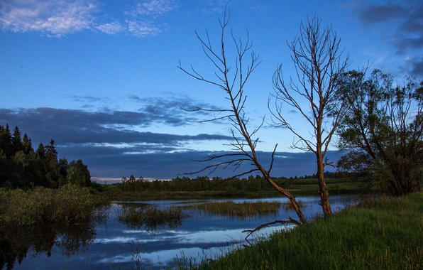 Picture summer, the sky, water, trees, sunset, nature, river, tree, swamp, the evening, Russia