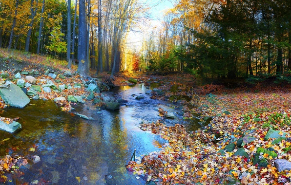 Picture autumn, forest, trees, river, stones, foliage, colorful
