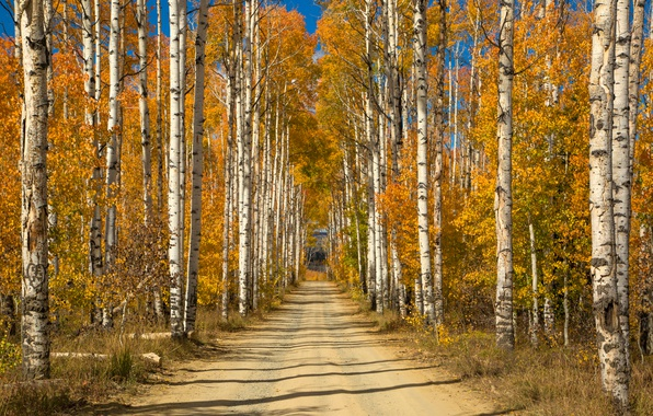 Picture road, autumn, trees, yellow, Sunny, alley, birch, grove
