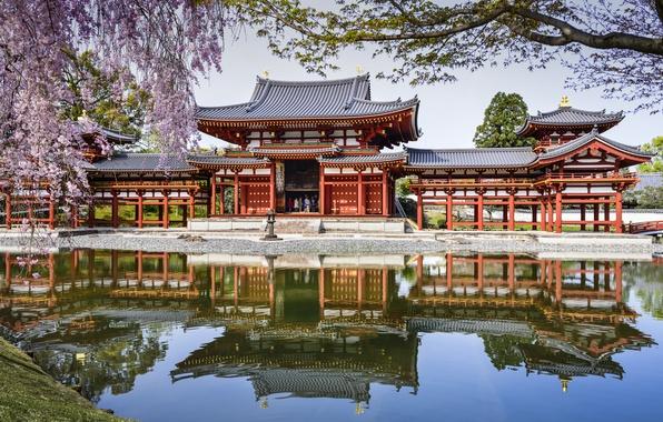 Picture pond, reflection, spring, Japan, Sakura, Japan, pond, Byodo-In Temple, Uji, Uji, The byodo-in temple