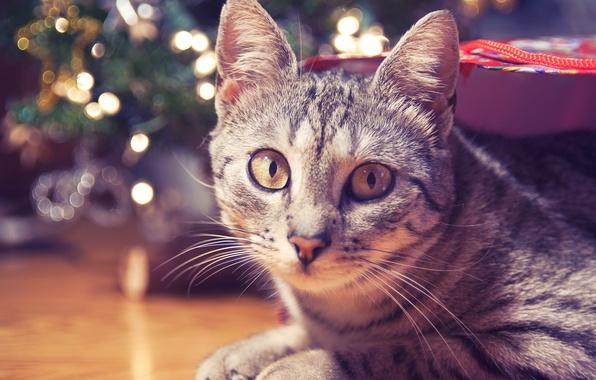Picture cat, look, floor, striped